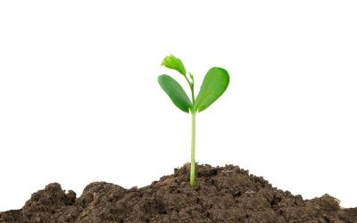 Neue Verfahren in der Pflanzenzüchtung