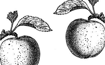 Äpfel und Kardio-Marker