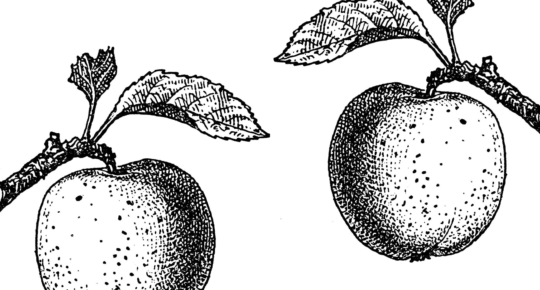 Äpfel Kardio-Marker